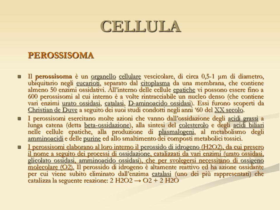 CELLULA PEROSSISOMA Il perossisoma è un organello cellulare vescicolare, di circa 0,5-1 μm di diametro, ubiquitario negli eucarioti, separato dal cito