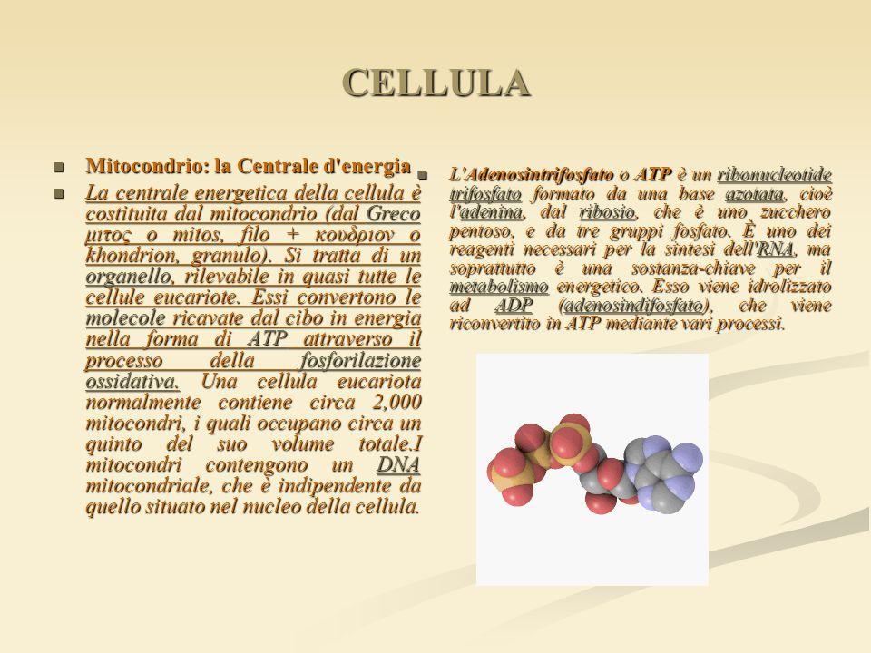 CELLULA Mitocondrio: la Centrale d'energia Mitocondrio: la Centrale d'energia La centrale energetica della cellula è costituita dal mitocondrio (dal G