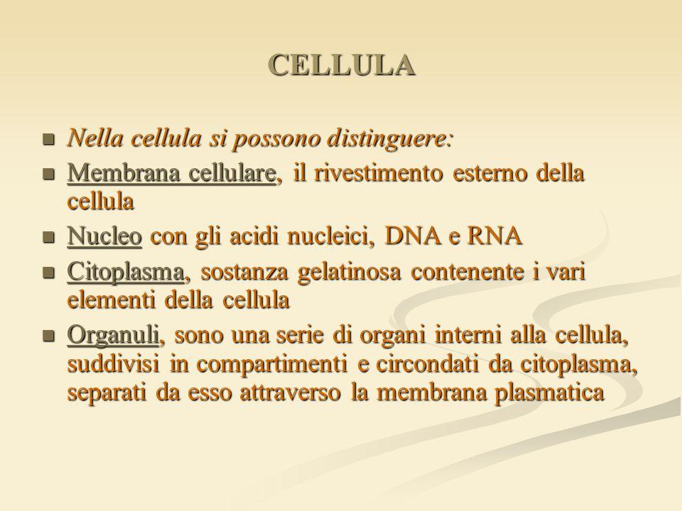 CELLULA Nella cellula si possono distinguere: Nella cellula si possono distinguere: Membrana cellulare, il rivestimento esterno della cellula Membrana