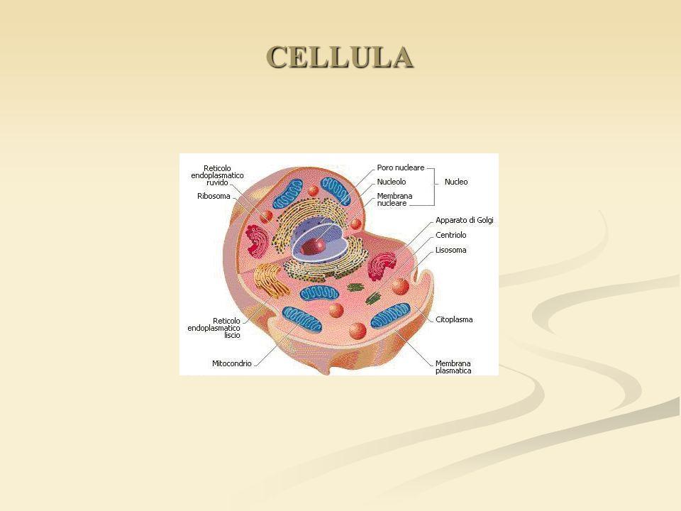 CELLULA CELLULA