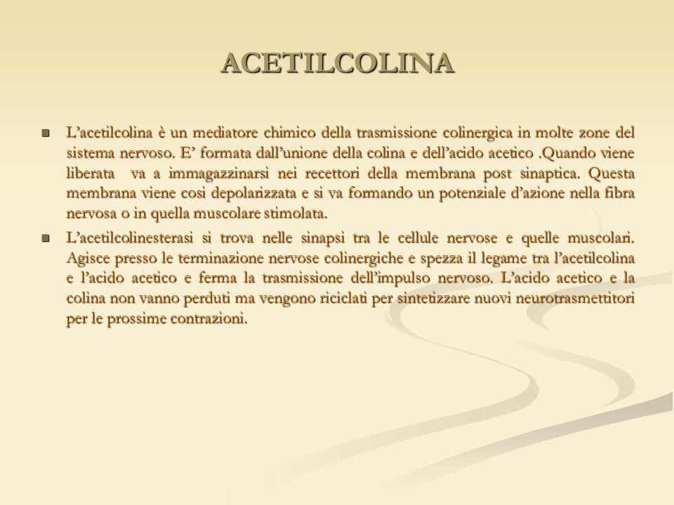 ACETILCOLINA L'acetilcolina è un mediatore chimico della trasmissione colinergica in molte zone del sistema nervoso. E' formata dall'unione della coli