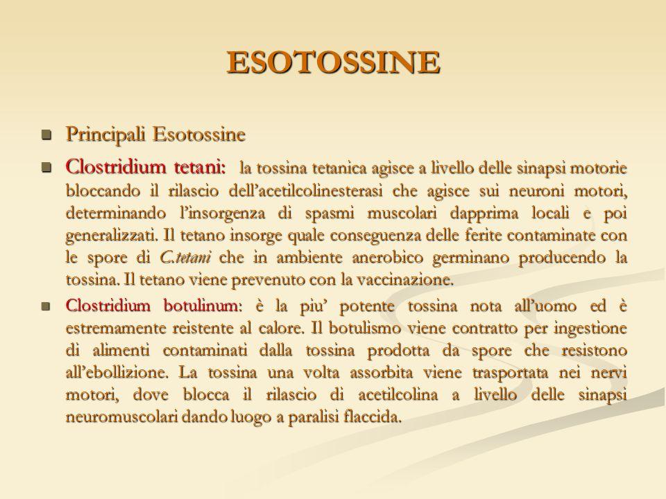 ESOTOSSINE Principali Esotossine Principali Esotossine Clostridium tetani: la tossina tetanica agisce a livello delle sinapsi motorie bloccando il ril