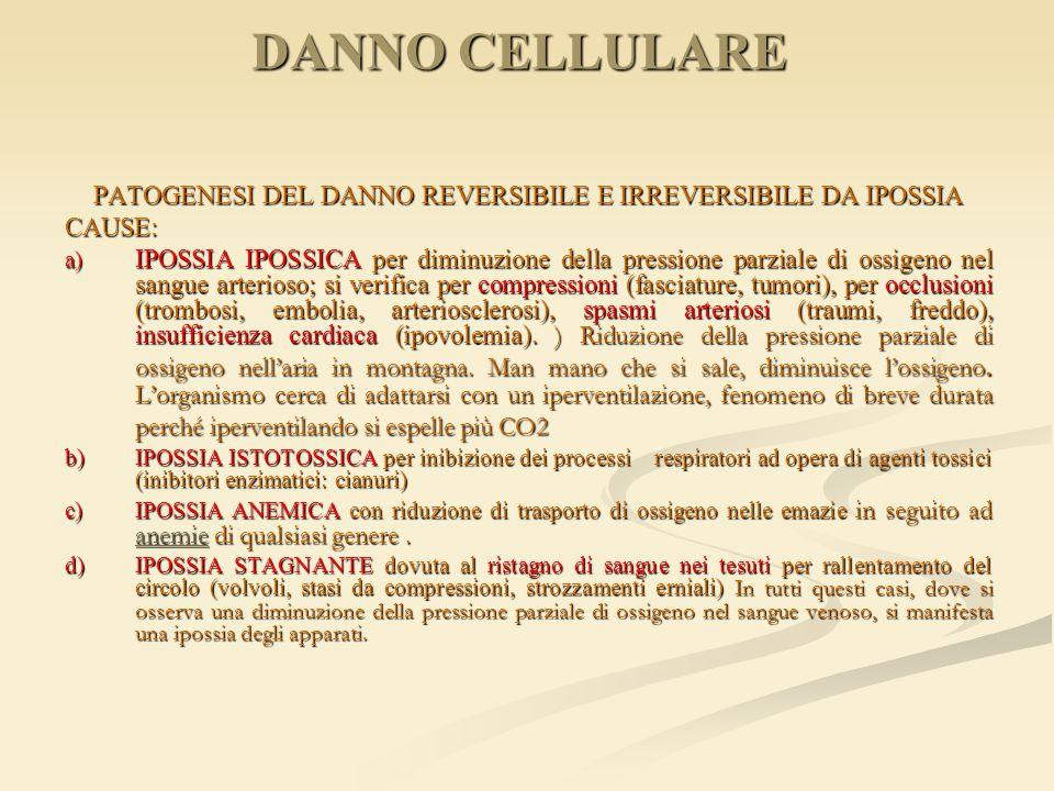 DANNO CELLULARE PATOGENESI DEL DANNO REVERSIBILE E IRREVERSIBILE DA IPOSSIA CAUSE: a) IPOSSIA IPOSSICA per diminuzione della pressione parziale di oss