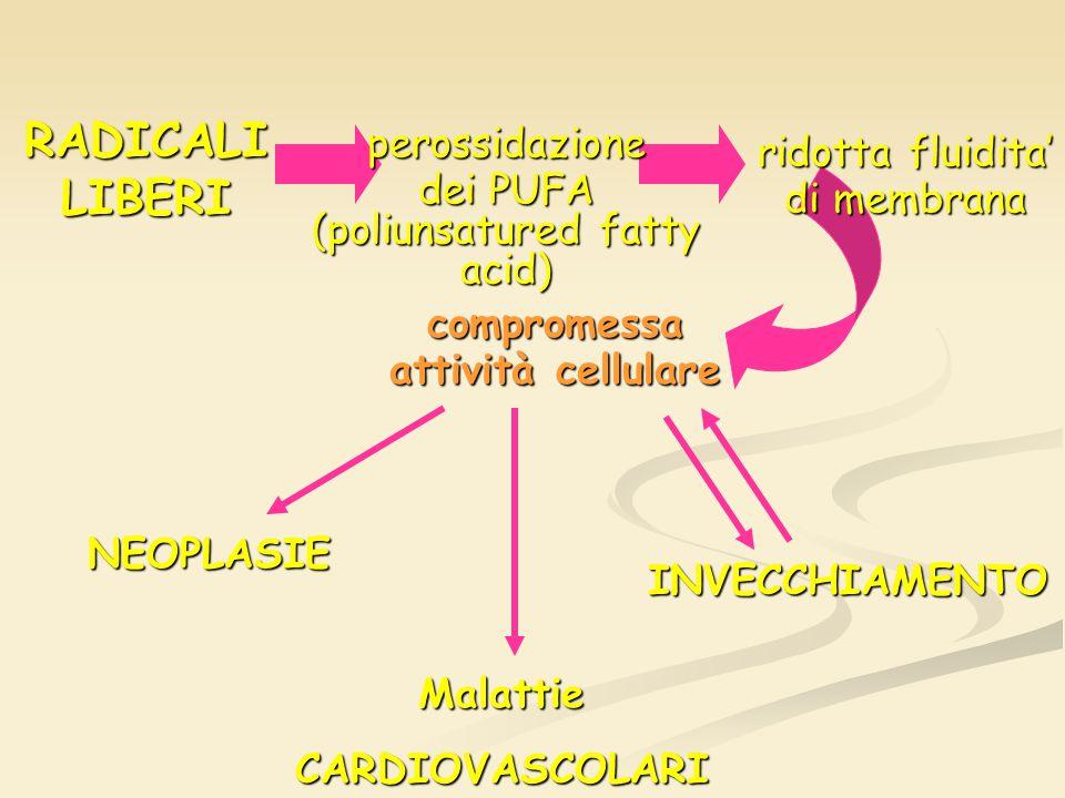 RADICALILIBERI ridotta fluidita' di membrana perossidazione dei PUFA (poliunsatured fatty acid) compromessa attività cellulare NEOPLASIE MalattieCARDI