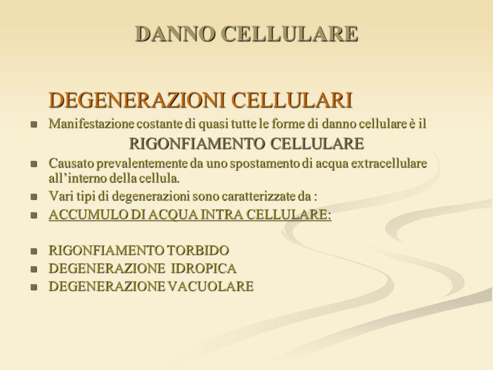 DANNO CELLULARE DEGENERAZIONI CELLULARI Manifestazione costante di quasi tutte le forme di danno cellulare è il Manifestazione costante di quasi tutte