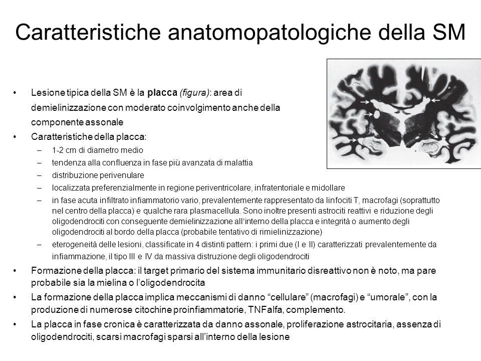 Caratteristiche anatomopatologiche della SM Lesione tipica della SM è la placca (figura): area di demielinizzazione con moderato coinvolgimento anche della componente assonale Caratteristiche della placca: –1-2 cm di diametro medio –tendenza alla confluenza in fase più avanzata di malattia –distribuzione perivenulare –localizzata preferenzialmente in regione periventricolare, infratentoriale e midollare –in fase acuta infiltrato infiammatorio vario, prevalentemente rappresentato da linfociti T, macrofagi (soprattutto nel centro della placca) e qualche rara plasmacellula.