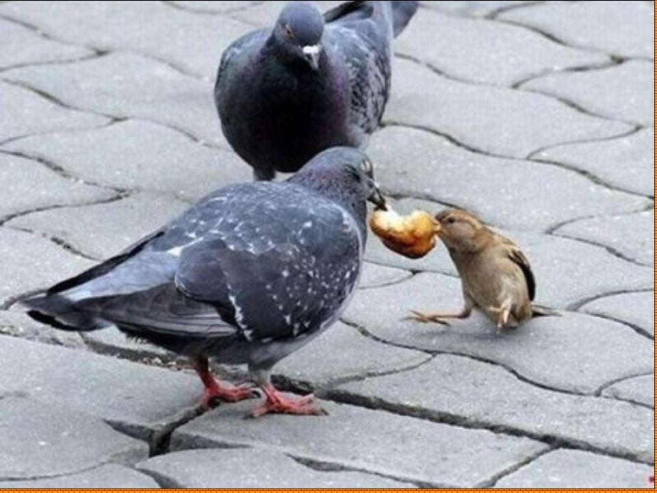 Non c'è deserto peggiore che una vita senza amici: l'amicizia moltiplica i beni e ripartisce i mali. (Baltasar Gracián)