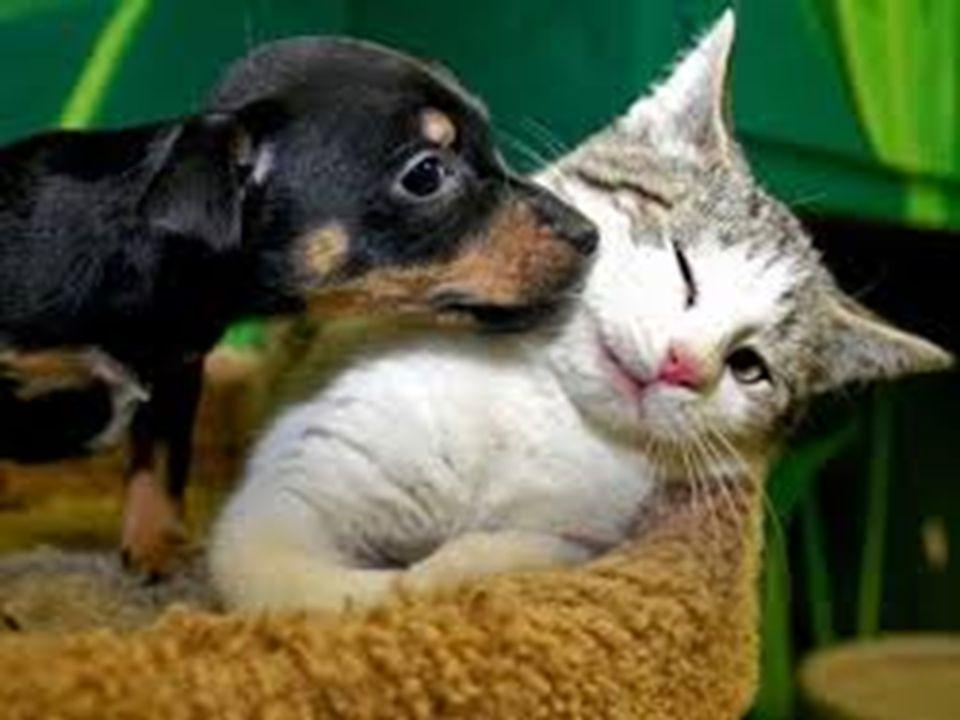 Il peggior peccato contro i nostri simili non è l'odio, ma l'indifferenza: questa è l'essenza della disumanità. (George Bernard Shaw)