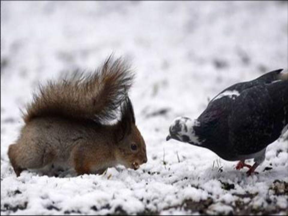 Tutti vogliono avere un amico, nessuno si occupa di essere un amico. (Alphonse Karr)