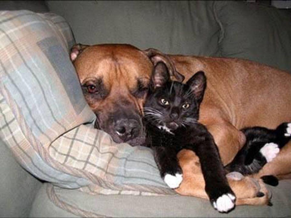 Due amici: un'anima sola divisa in due corpi. (Aristotele)