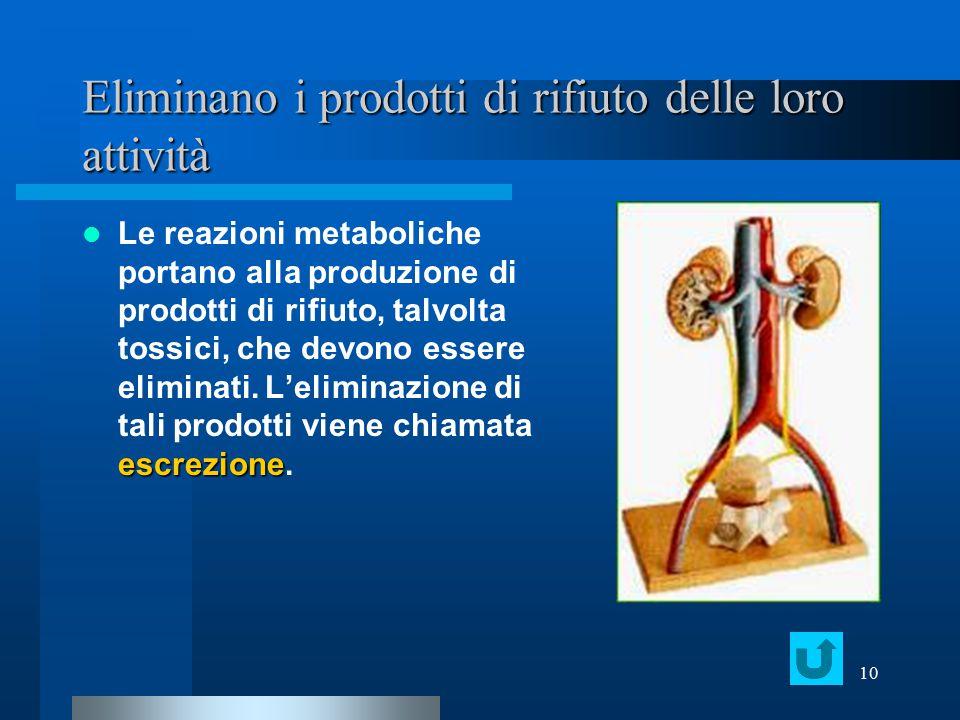10 Eliminano i prodotti di rifiuto delle loro attività escrezione Le reazioni metaboliche portano alla produzione di prodotti di rifiuto, talvolta tos