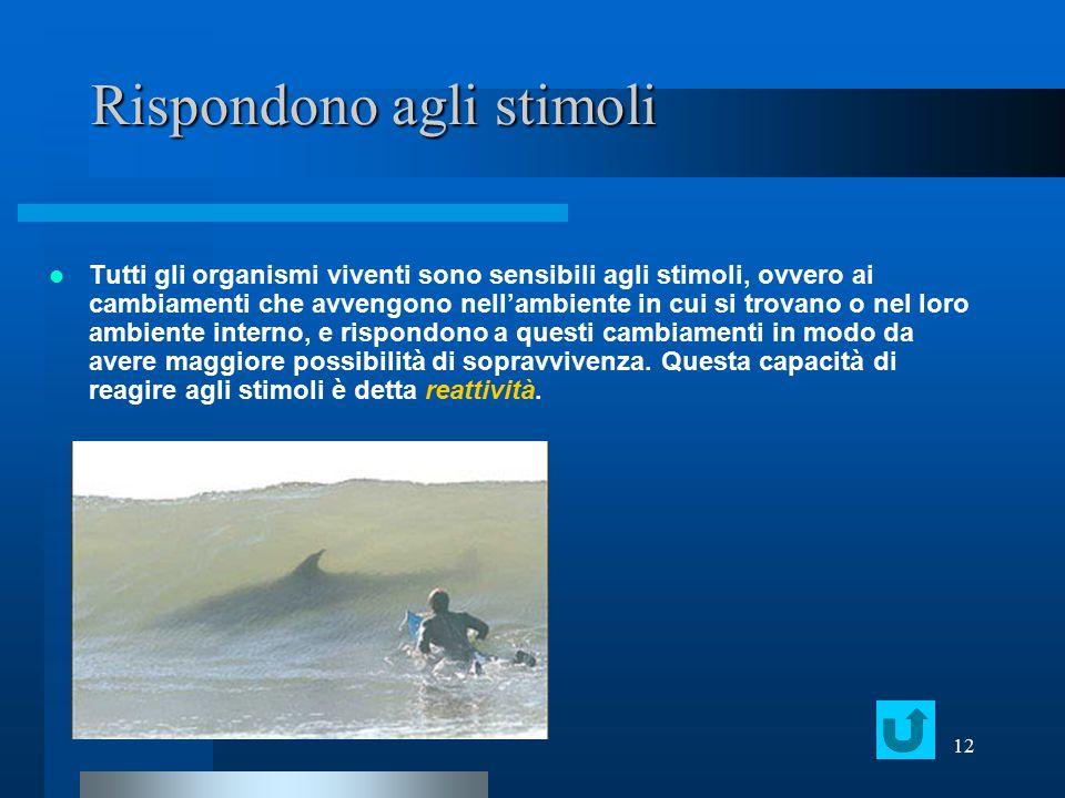 12 Rispondono agli stimoli Tutti gli organismi viventi sono sensibili agli stimoli, ovvero ai cambiamenti che avvengono nell'ambiente in cui si trovan