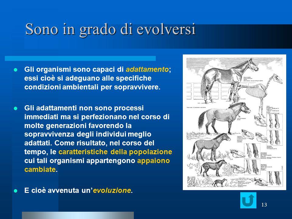 13 Sono in grado di evolversi Gli organismi sono capaci di adattamento; essi cioè si adeguano alle specifiche condizioni ambientali per sopravvivere.