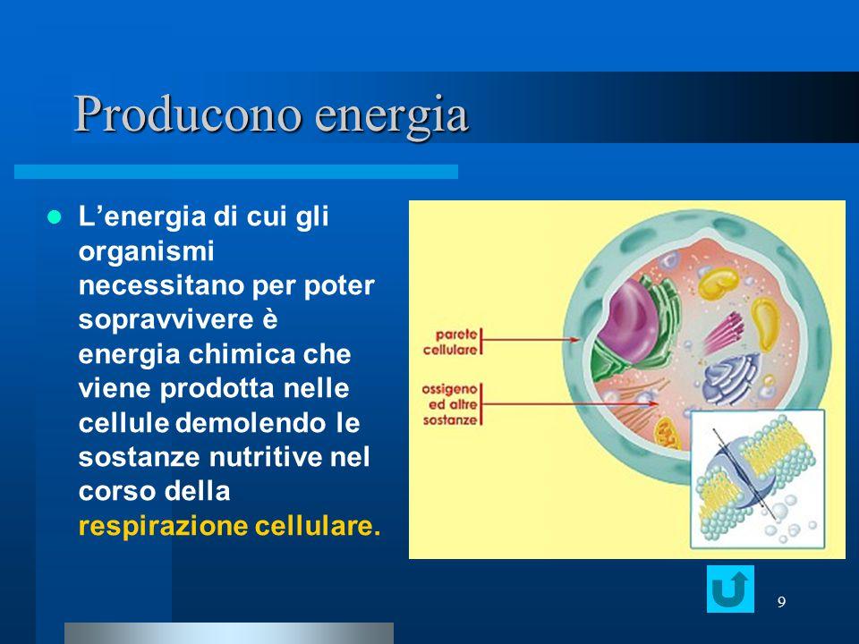 9 Producono energia L'energia di cui gli organismi necessitano per poter sopravvivere è energia chimica che viene prodotta nelle cellule demolendo le