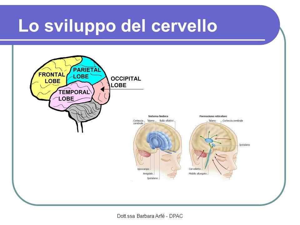 Lo sviluppo del cervello Dott.ssa Barbara Arfé - DPAC