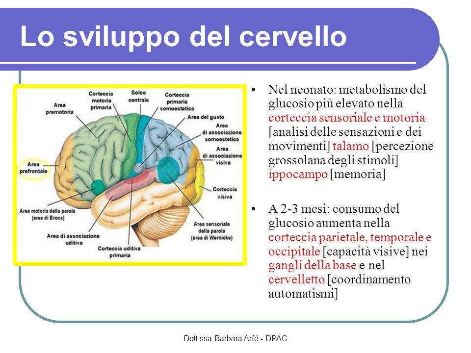 Lo sviluppo del cervello Nel neonato: metabolismo del glucosio più elevato nella corteccia sensoriale e motoria [analisi delle sensazioni e dei movimenti] talamo [percezione grossolana degli stimoli] ippocampo [memoria] A 2-3 mesi: consumo del glucosio aumenta nella corteccia parietale, temporale e occipitale [capacità visive] nei gangli della base e nel cervelletto [coordinamento automatismi] Dott.ssa Barbara Arfé - DPAC