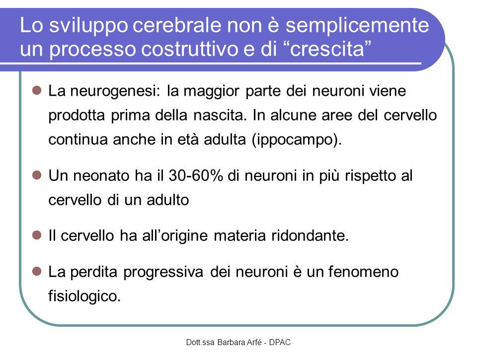 Lo sviluppo cerebrale non è semplicemente un processo costruttivo e di crescita La neurogenesi: la maggior parte dei neuroni viene prodotta prima della nascita.