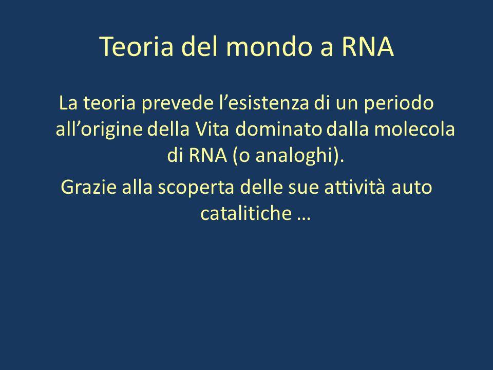 Teoria del mondo a RNA La teoria prevede l'esistenza di un periodo all'origine della Vita dominato dalla molecola di RNA (o analoghi). Grazie alla sco