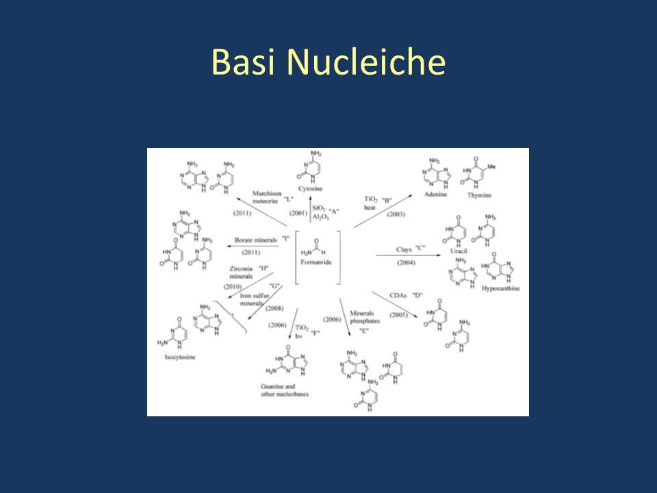 Basi Nucleiche