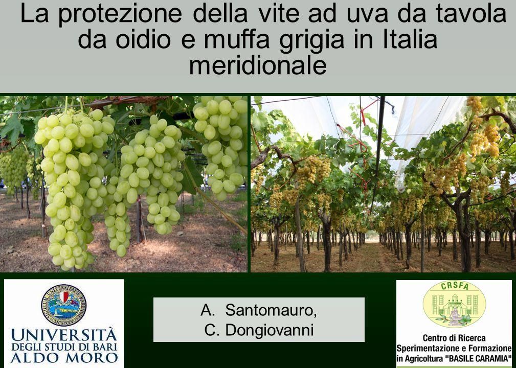 La protezione della vite ad uva da tavola da oidio e muffa grigia in Italia meridionale A.Santomauro, C. Dongiovanni