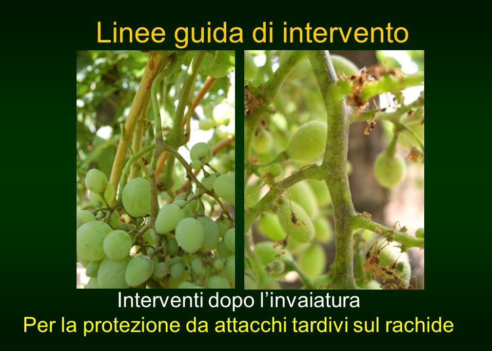 Linee guida di intervento Interventi dopo l'invaiatura Per la protezione da attacchi tardivi sul rachide