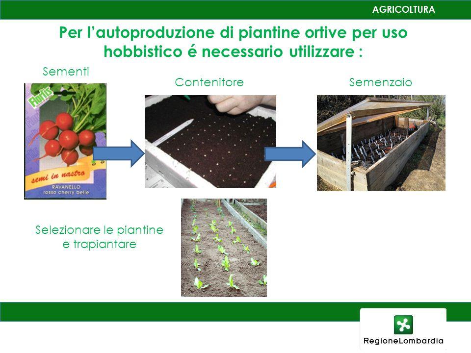 Produttori di piantine ortive in Lombardia per uso hobbistico e professionale ca. 300 aziende