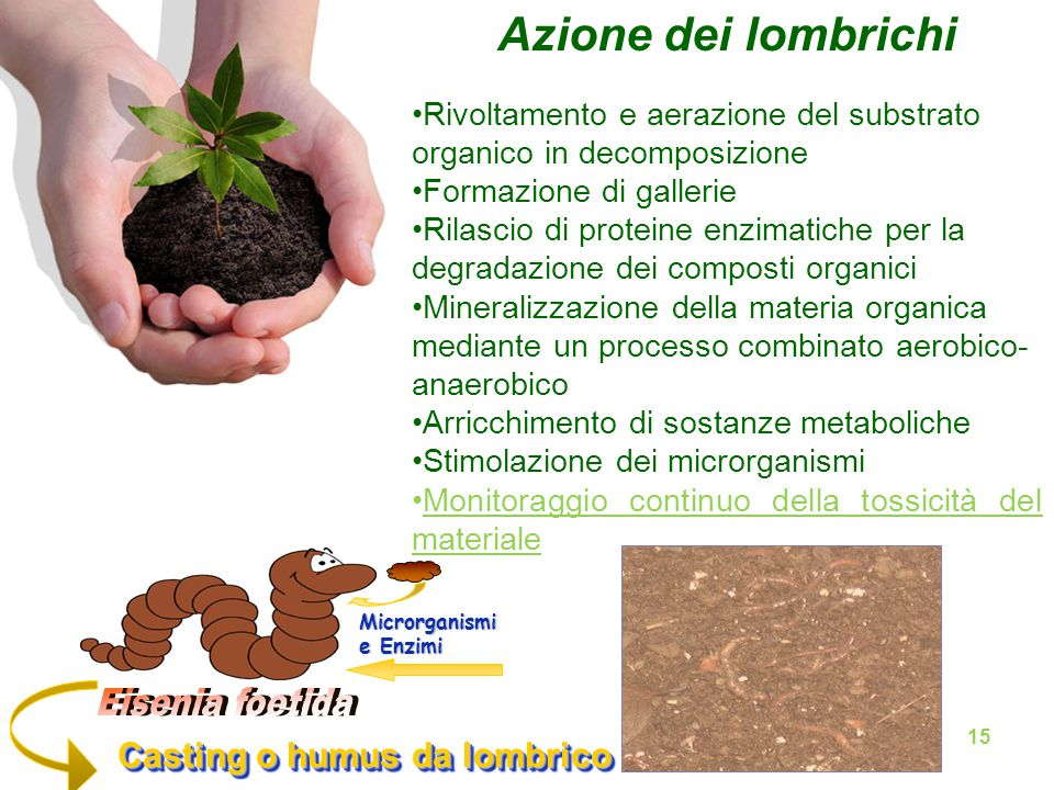 Azione dei lombrichi Casting o humus da lombrico Casting o humus da lombrico Microrganismi e Enzimi Rivoltamento e aerazione del substrato organico in decomposizione Formazione di gallerie Rilascio di proteine enzimatiche per la degradazione dei composti organici Mineralizzazione della materia organica mediante un processo combinato aerobico- anaerobico Arricchimento di sostanze metaboliche Stimolazione dei microrganismi Monitoraggio continuo della tossicità del materiale 15
