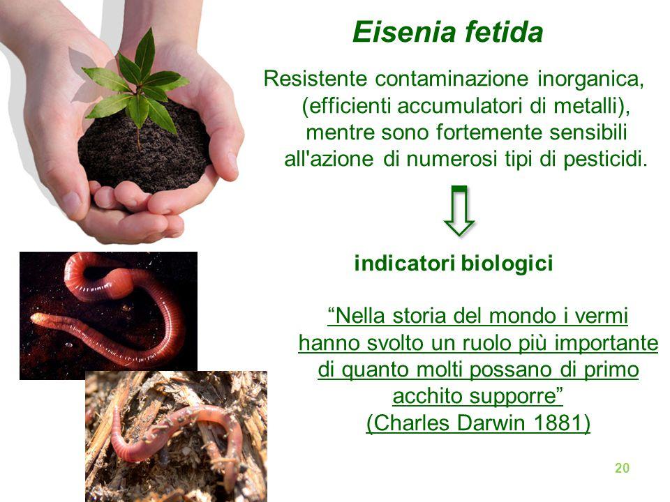 Eisenia fetida Resistente contaminazione inorganica, (efficienti accumulatori di metalli), mentre sono fortemente sensibili all azione di numerosi tipi di pesticidi.