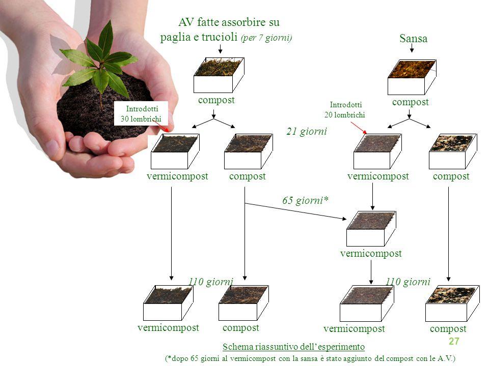 AV fatte assorbire su paglia e trucioli (per 7 giorni) compost Sansa compost vermicompost 21 giorni vermicompostcompost 110 giorni vermicompost compos