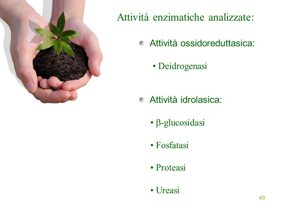 Attività enzimatiche analizzate: Attività ossidoreduttasica: Deidrogenasi Attività idrolasica:  -glucosidasi Fosfatasi Proteasi Ureasi 40