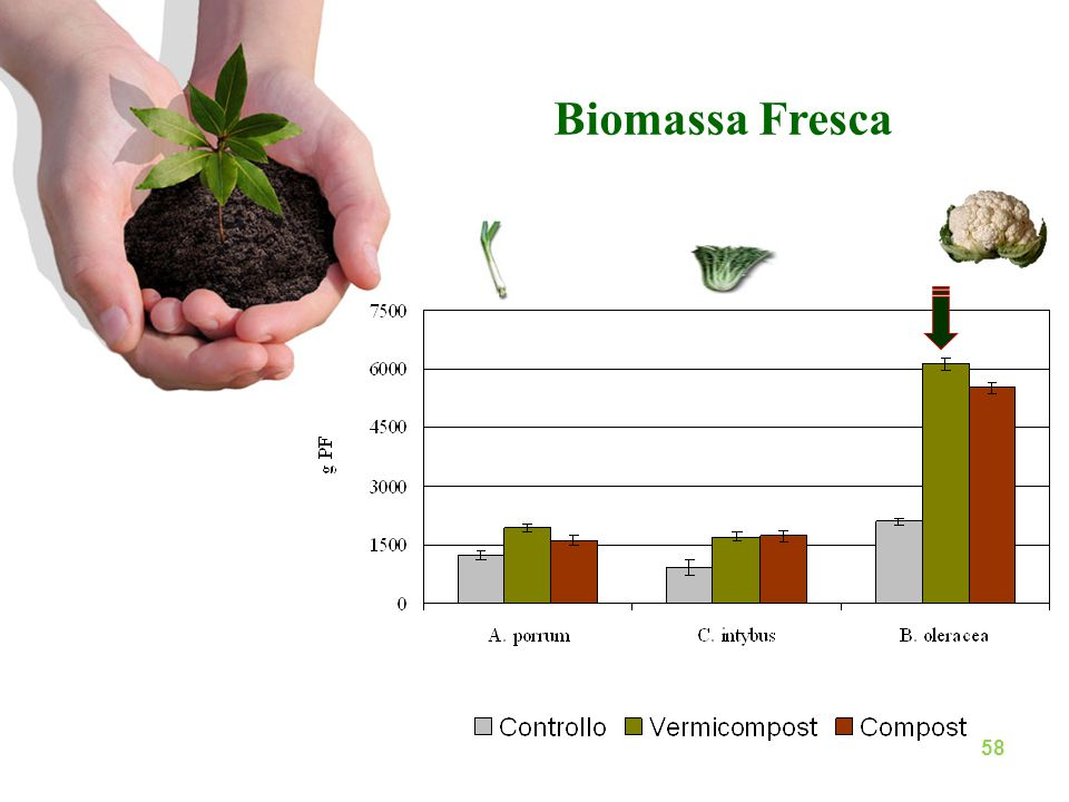 Biomassa Fresca 58