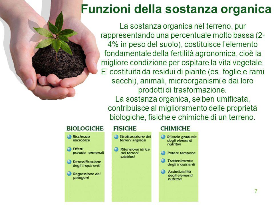 7 La sostanza organica nel terreno, pur rappresentando una percentuale molto bassa (2- 4% in peso del suolo), costituisce l'elemento fondamentale della fertilità agronomica, cioè la migliore condizione per ospitare la vita vegetale.