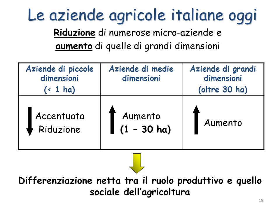 Aziende di piccole dimensioni (< 1 ha) Aziende di medie dimensioni Aziende di grandi dimensioni (oltre 30 ha) Accentuata Riduzione Aumento (1 – 30 ha) Aumento Riduzione di numerose micro-aziende e aumento di quelle di grandi dimensioni Differenziazione netta tra il ruolo produttivo e quello sociale dell'agricoltura Le aziende agricole italiane oggi 19