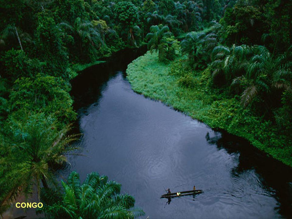 10° - CONGO Lunghezza: 4371 km - Portata media: 41800 (metri cubi/sec) - Sorgente: Monte Musofi 1.420 mt.