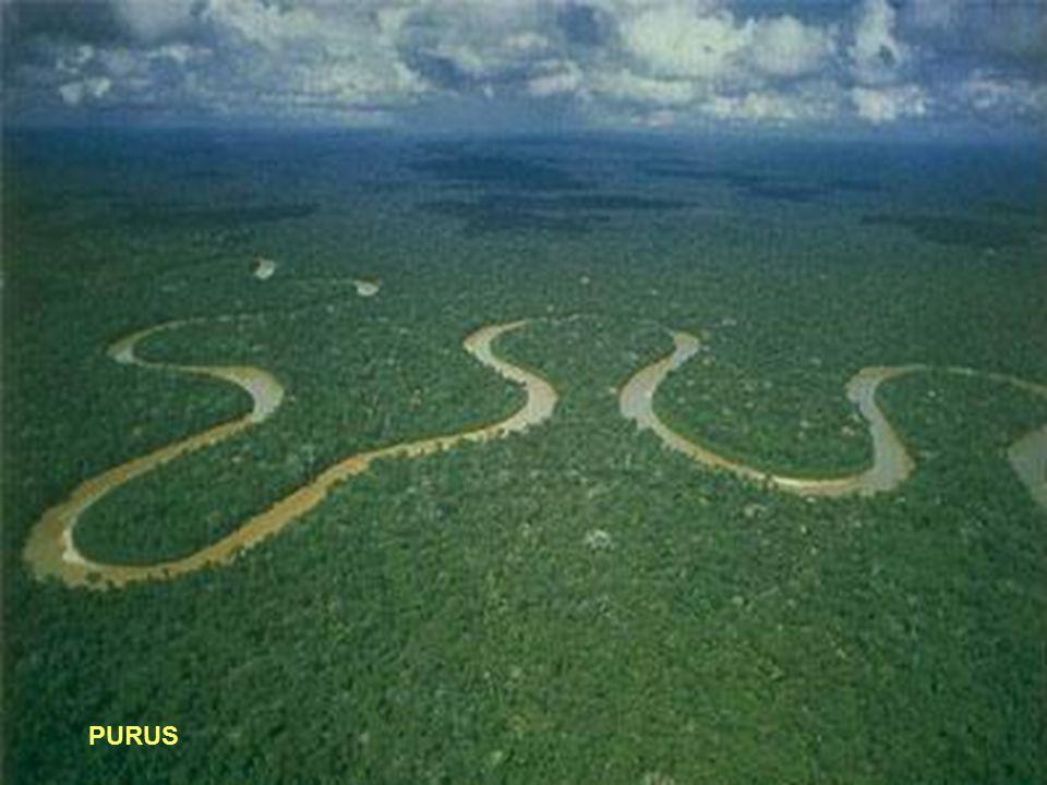 17° - PURUS Lunghezza: 3379 km - Portata media: 8400 (metri cubi/sec) - Sorgente: Ande Peruviane 6384 mt.