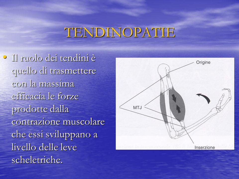 TENDINOPATIE Il ruolo dei tendini è quello di trasmettere con la massima efficacia le forze prodotte dalla contrazione muscolare che essi sviluppano a livello delle leve scheletriche.