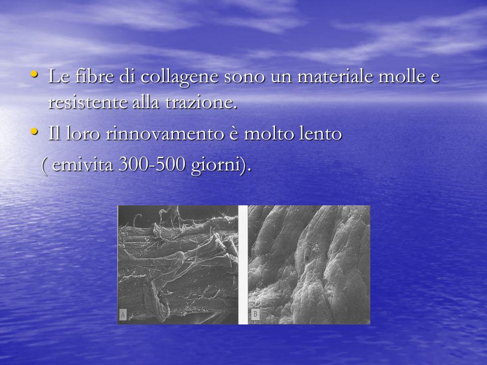 Le fibre di collagene sono un materiale molle e resistente alla trazione. Le fibre di collagene sono un materiale molle e resistente alla trazione. Il
