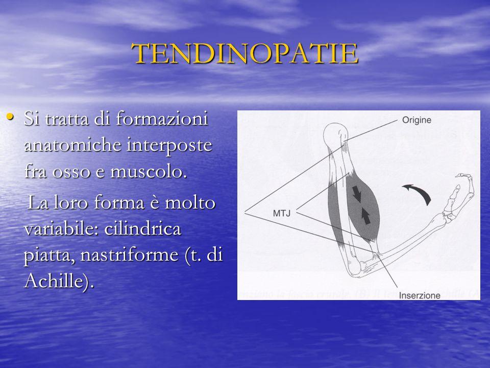 TENDINOSI TENDINOSI + REAZIONE INFIAMMATORIA REAZIONE INFIAMMATORIA Tendinite vere