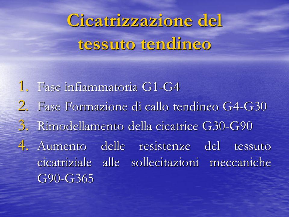 Cicatrizzazione del tessuto tendineo 1. Fase infiammatoria G1-G4 2. Fase Formazione di callo tendineo G4-G30 3. Rimodellamento della cicatrice G30-G90