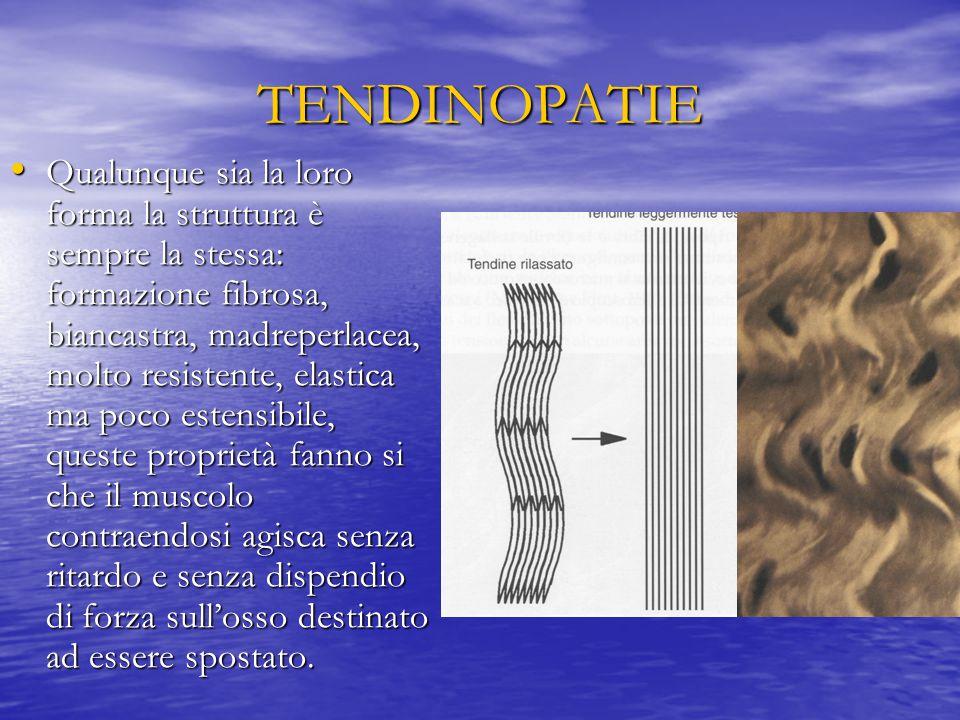 TENDINOPATIE Qualunque sia la loro forma la struttura è sempre la stessa: formazione fibrosa, biancastra, madreperlacea, molto resistente, elastica ma