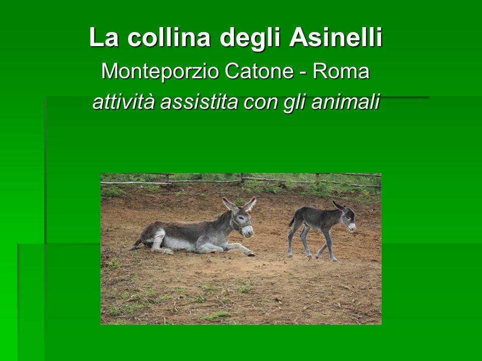La collina degli Asinelli Monteporzio Catone - Roma attività assistita con gli animali