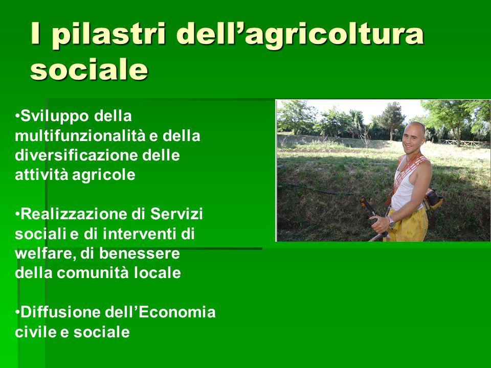I pilastri dell'agricoltura sociale Sviluppo della multifunzionalità e della diversificazione delle attività agricole Realizzazione di Servizi sociali