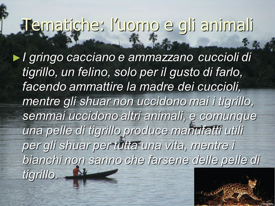 Tematiche: l'uomo e gli animali ► I gringo cacciano e ammazzano cuccioli di tigrillo, un felino, solo per il gusto di farlo, facendo ammattire la madr