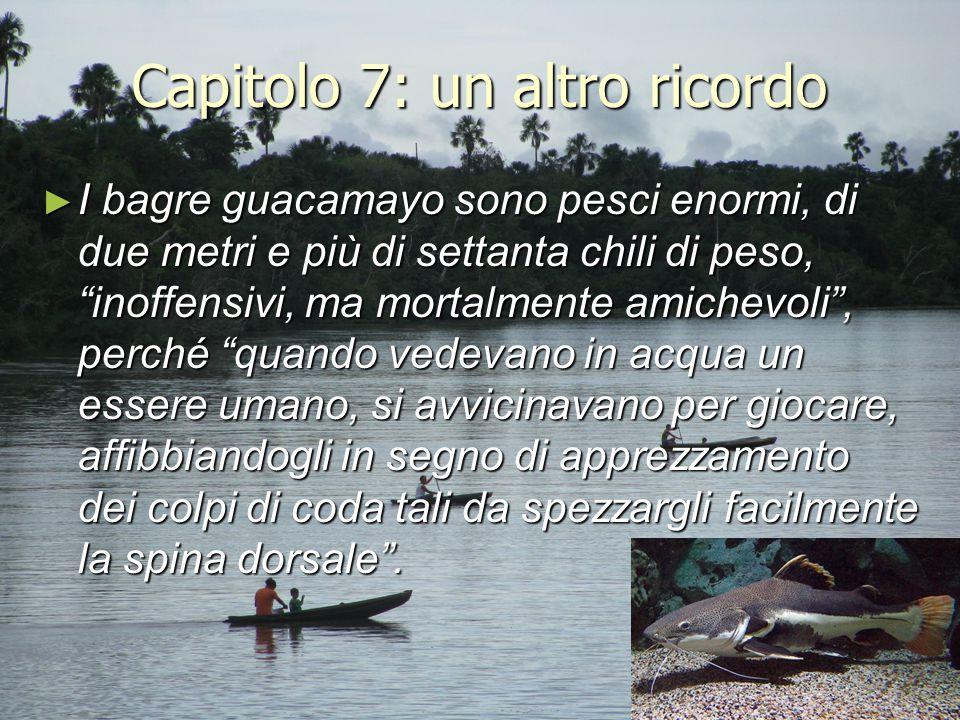 """Capitolo 7: un altro ricordo ► I bagre guacamayo sono pesci enormi, di due metri e più di settanta chili di peso, """"inoffensivi, ma mortalmente amichev"""
