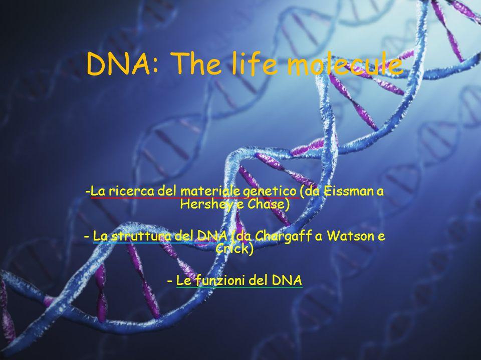 DNA: The life molecule -La ricerca del materiale genetico (da Eissman a Hershey e Chase) - La struttura del DNA (da Chargaff a Watson e Crick) - Le fu