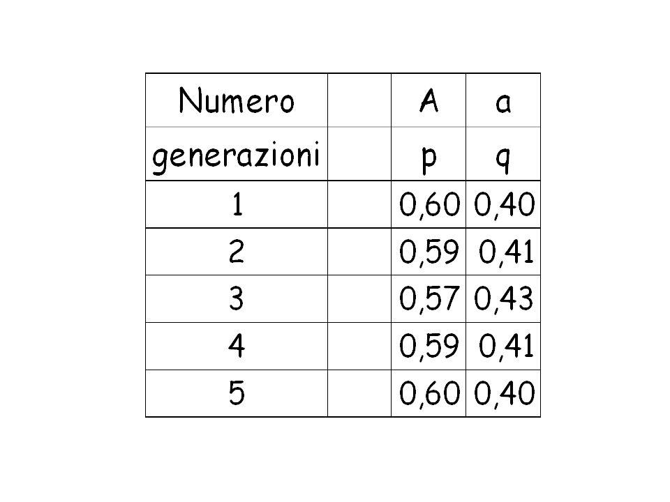 Frequenze dei geni T(sensibilità) e t (insensibilità) q 2 (tt)= 0.30 q (t) =0.55 p (T)= 1-q= 0.45 p 2 (TT)=0.20 2pq (Tt) = 0.50