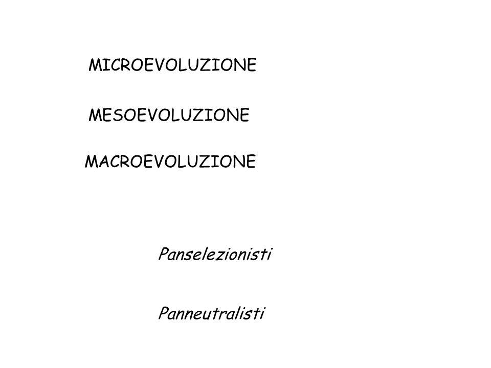 MICROEVOLUZIONE MACROEVOLUZIONE MESOEVOLUZIONE Panselezionisti Panneutralisti