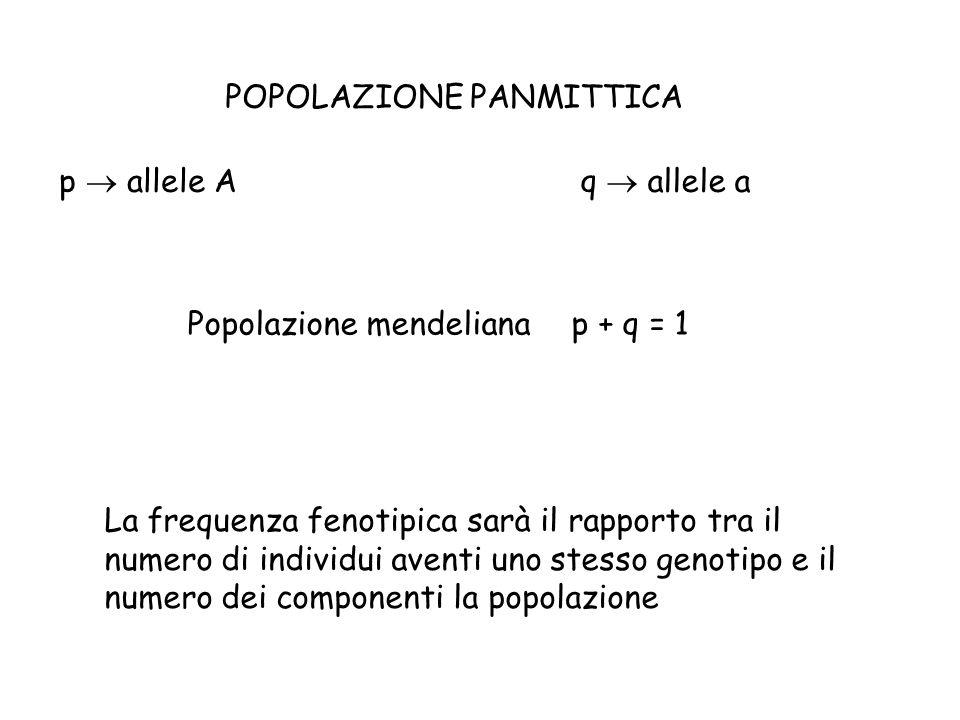 POPOLAZIONE PANMITTICA p  allele Aq  allele a Popolazione mendelianap + q = 1 La frequenza fenotipica sarà il rapporto tra il numero di individui aventi uno stesso genotipo e il numero dei componenti la popolazione