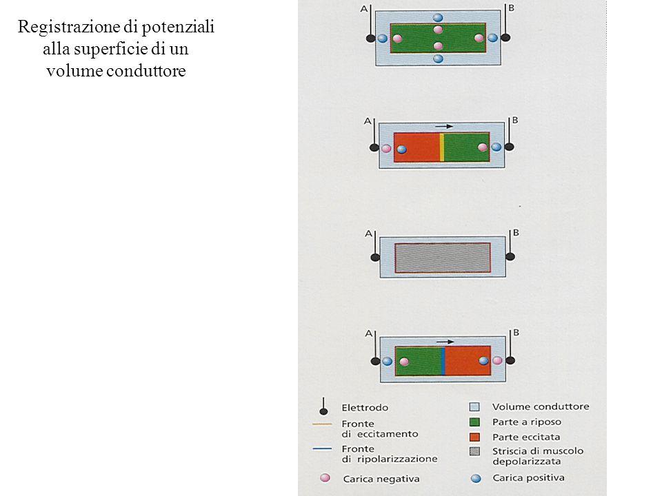 Registrazione di potenziali alla superficie di un volume conduttore