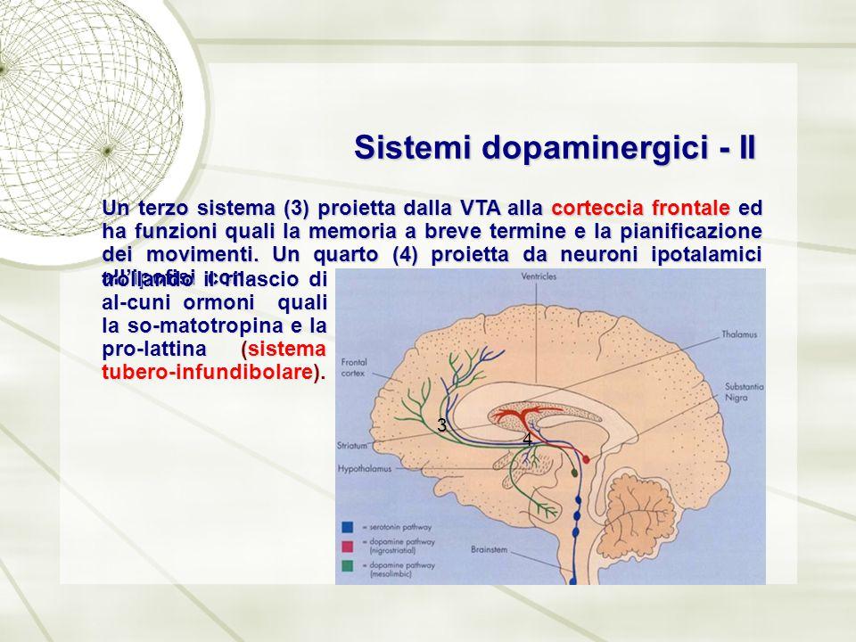 Sistemi dopaminergici - II Un terzo sistema (3) proietta dalla VTA alla corteccia frontale ed ha funzioni quali la memoria a breve termine e la pianif